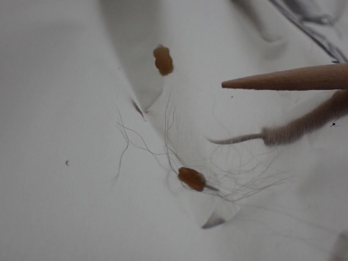 f:id:insectmania:20210717165903j:plain