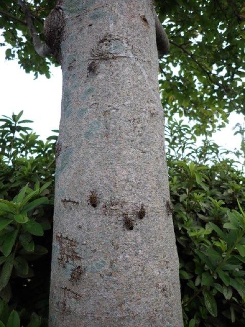 f:id:insectmania:20210917224521j:plain