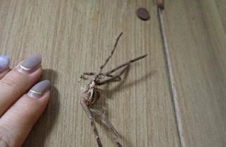 f:id:insectmania:20210917224837j:plain