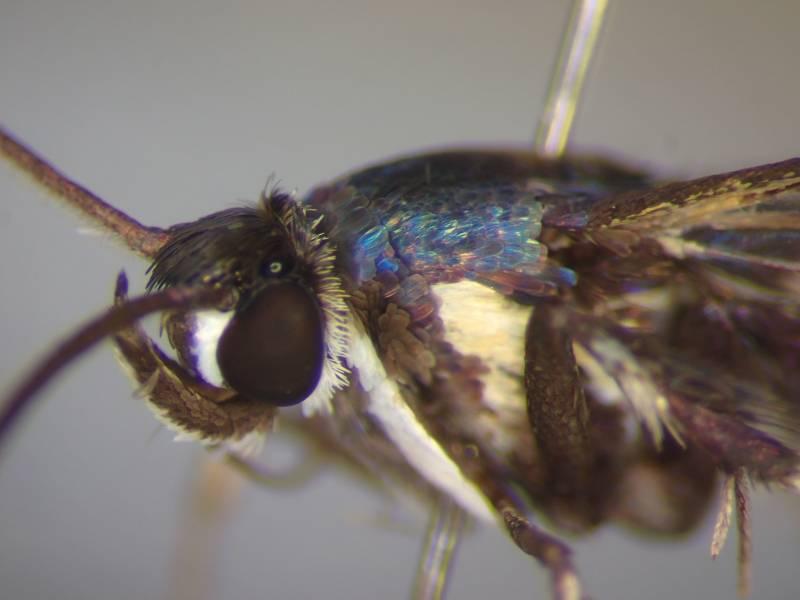 f:id:insectmoth:20170102004002j:plain