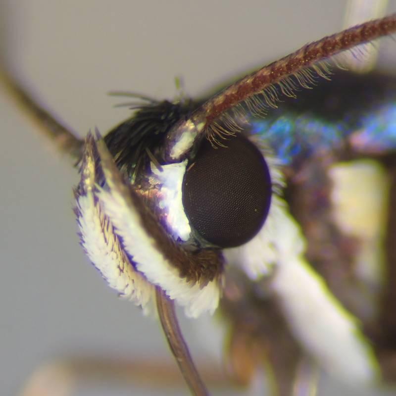 f:id:insectmoth:20170102004023j:plain
