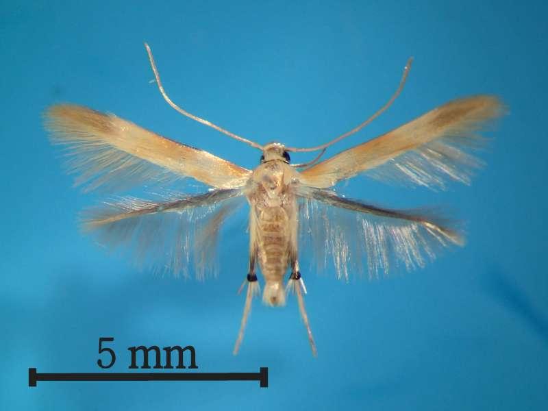 f:id:insectmoth:20170102133246j:plain