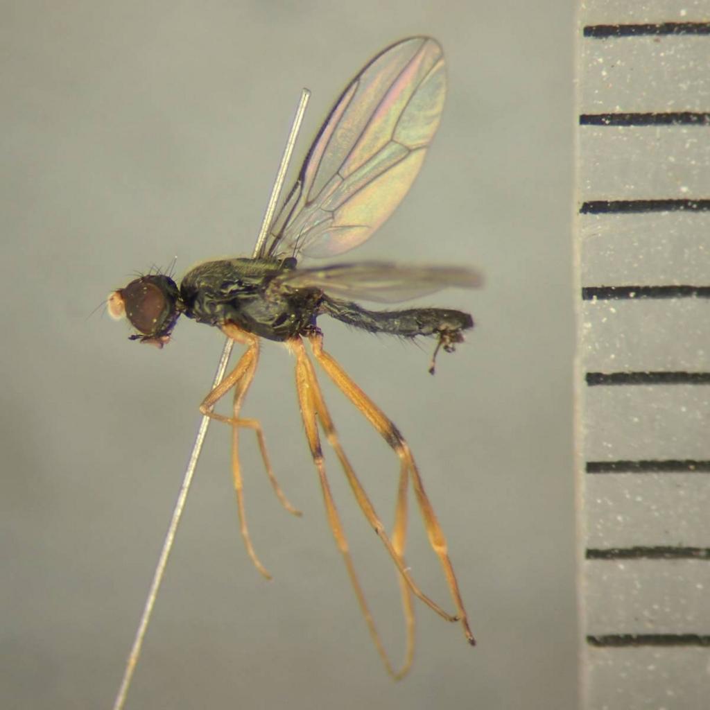 f:id:insectmoth:20170102134155j:plain