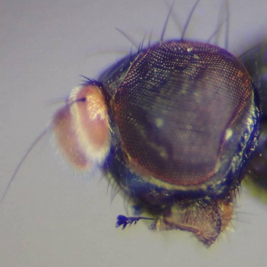 f:id:insectmoth:20170102134208j:plain