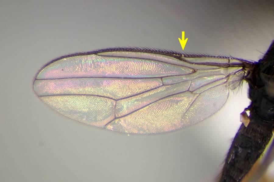 f:id:insectmoth:20170102134218j:plain