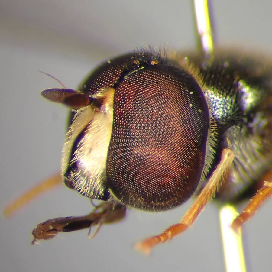 f:id:insectmoth:20170102150924j:plain