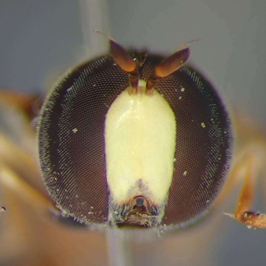 f:id:insectmoth:20170102151032j:plain