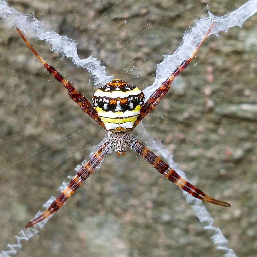f:id:insectmoth:20170102162324j:plain