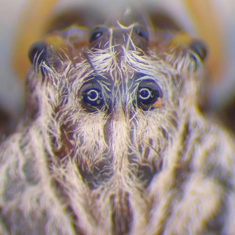 f:id:insectmoth:20170102162640j:plain