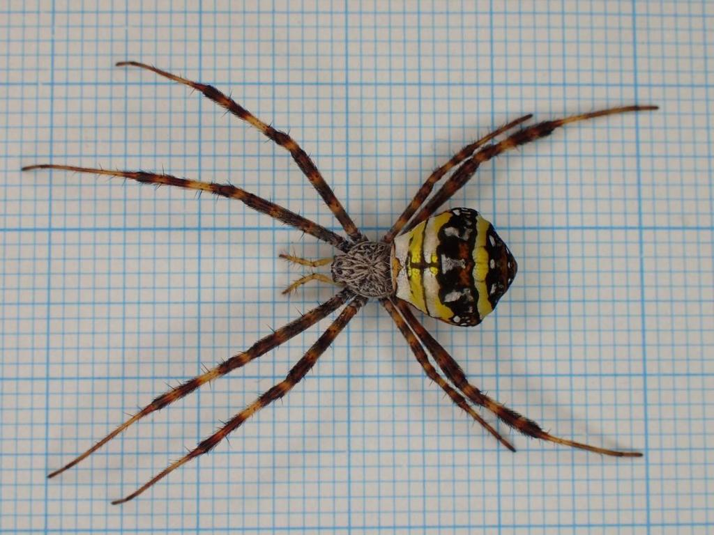 f:id:insectmoth:20170102162654j:plain