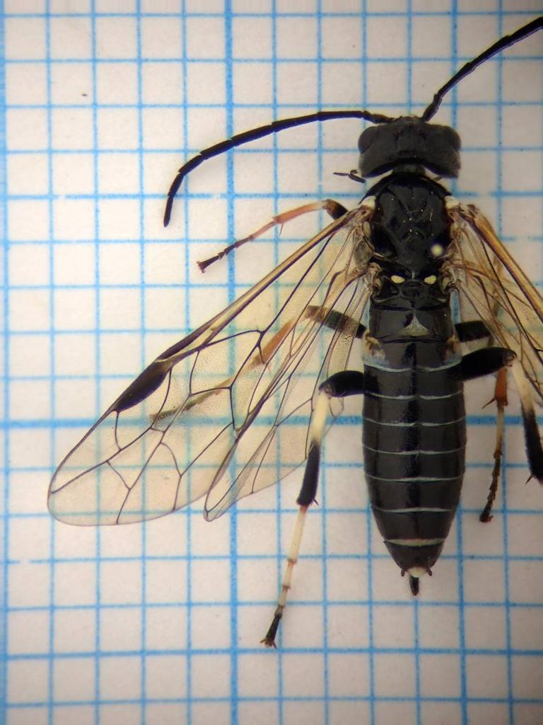 f:id:insectmoth:20170102163956j:plain