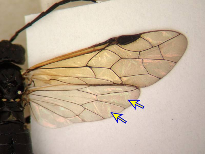 f:id:insectmoth:20170102164038j:plain