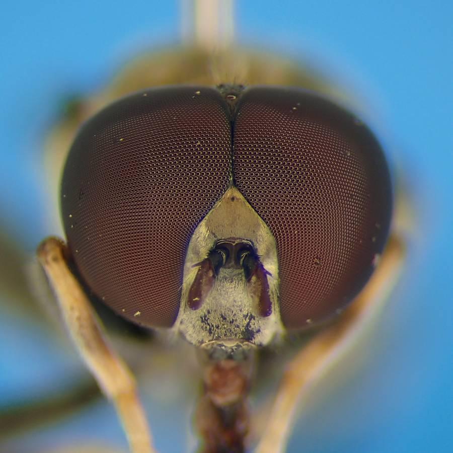 f:id:insectmoth:20170102190824j:plain