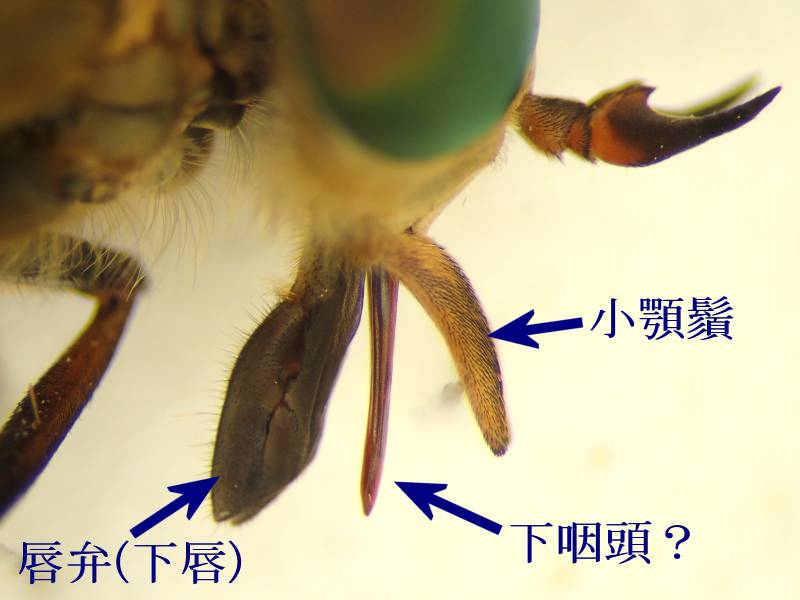 f:id:insectmoth:20170102191755j:plain