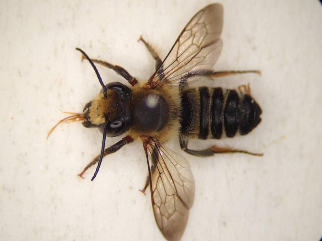 f:id:insectmoth:20170102220115j:plain