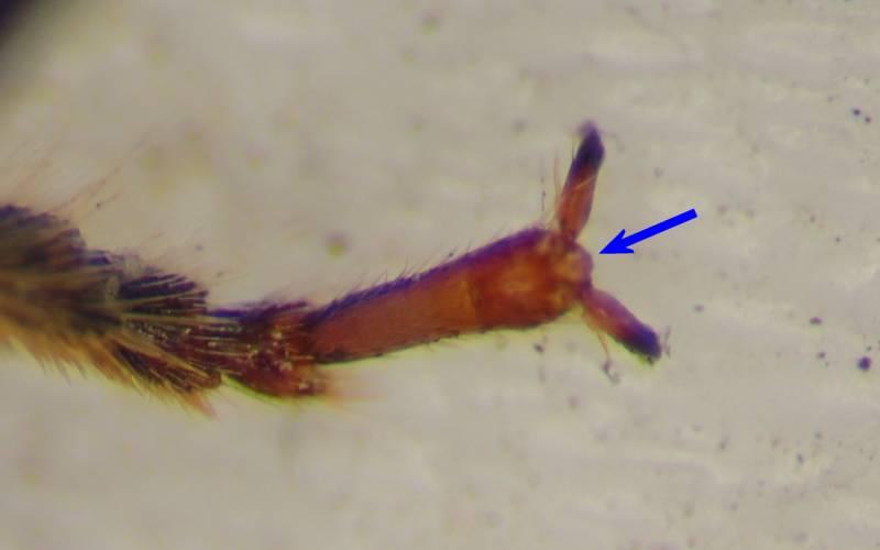 f:id:insectmoth:20170102220148j:plain