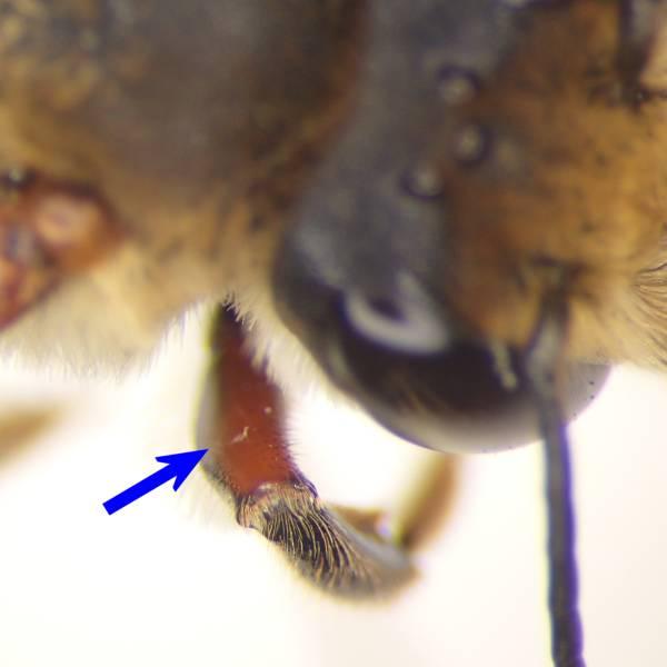 f:id:insectmoth:20170102233637j:plain