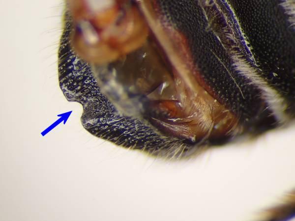 f:id:insectmoth:20170102233926j:plain