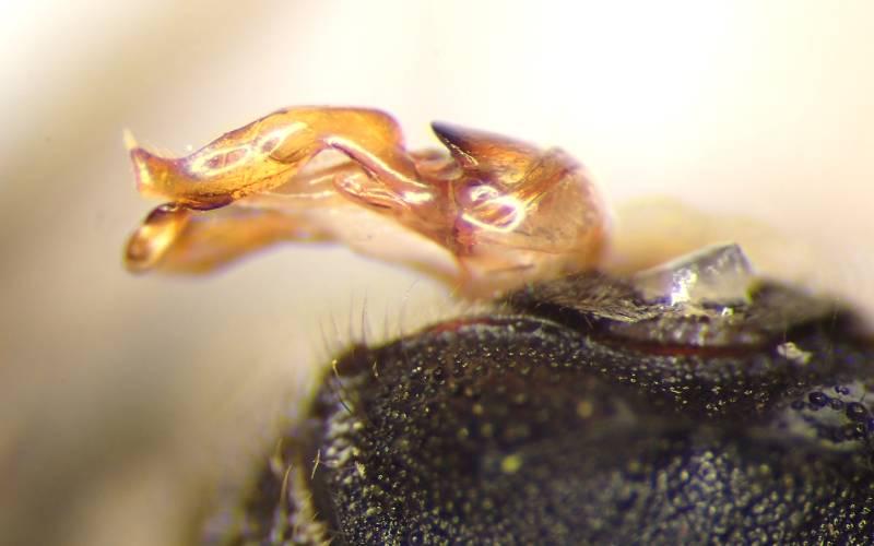 f:id:insectmoth:20170102234113j:plain