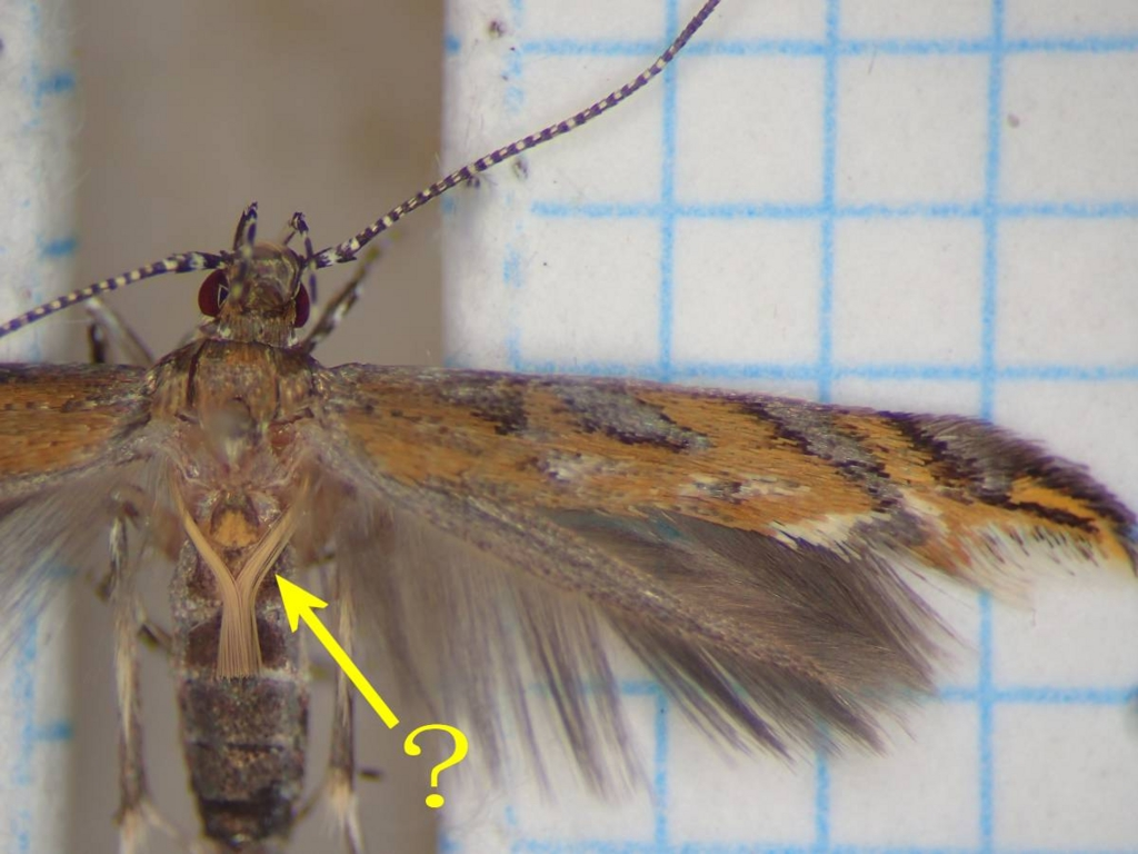 f:id:insectmoth:20170102235356j:plain