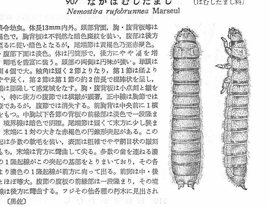 f:id:insectmoth:20170103012404j:plain