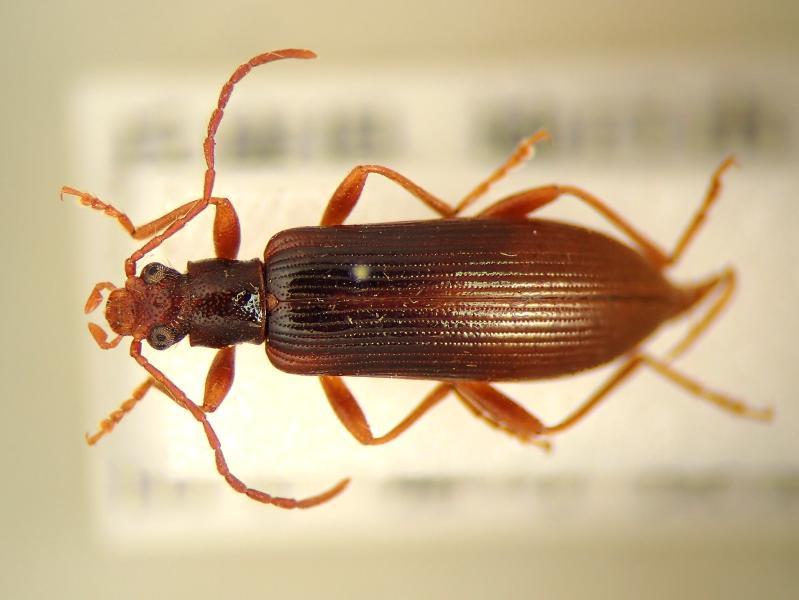 f:id:insectmoth:20170103012431j:plain