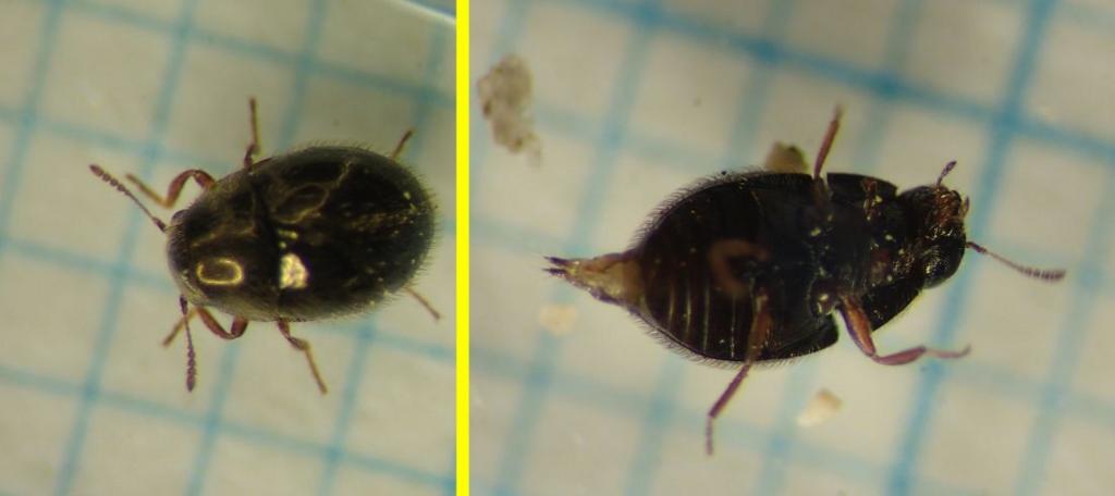 f:id:insectmoth:20170103033833j:plain