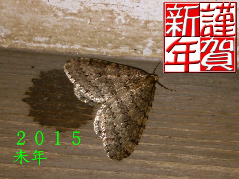 f:id:insectmoth:20170103180852j:plain