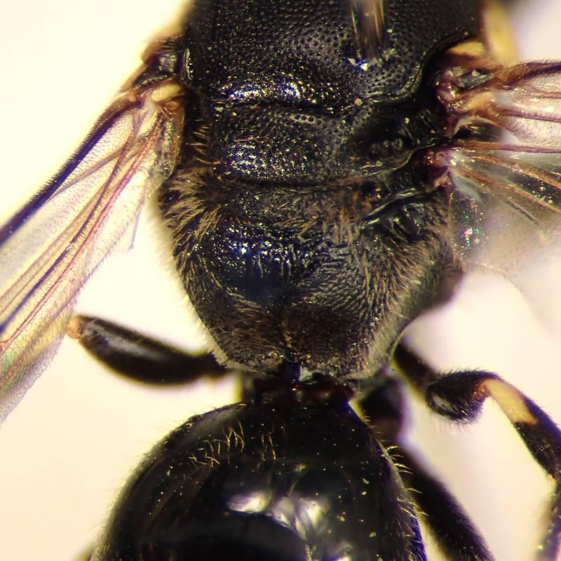 f:id:insectmoth:20170103181829j:plain