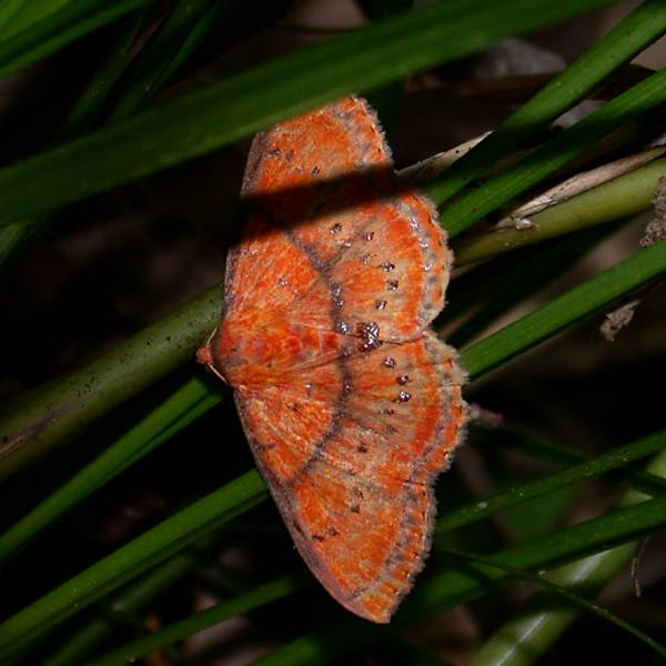 f:id:insectmoth:20170103183155j:plain