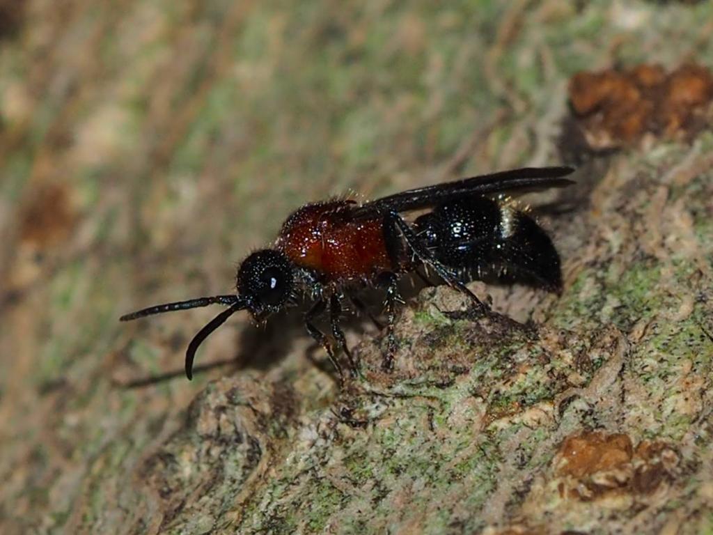 f:id:insectmoth:20170104205817j:plain
