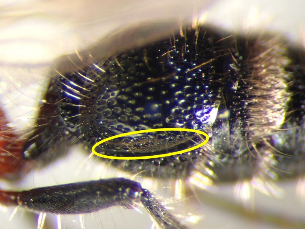 f:id:insectmoth:20170104205839j:plain