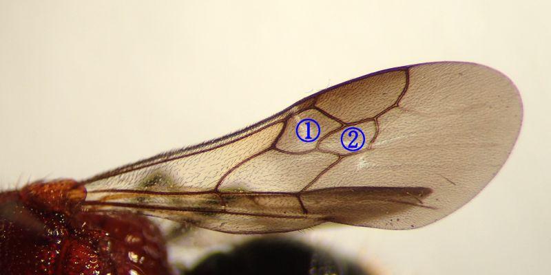 f:id:insectmoth:20170104211309j:plain