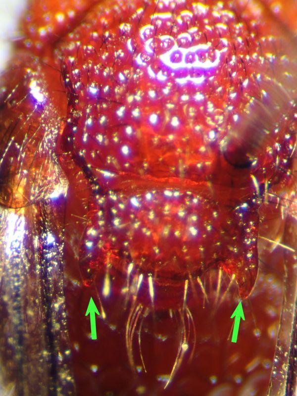 f:id:insectmoth:20170104211334j:plain