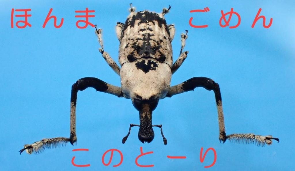 f:id:insectmoth:20170104231913j:plain