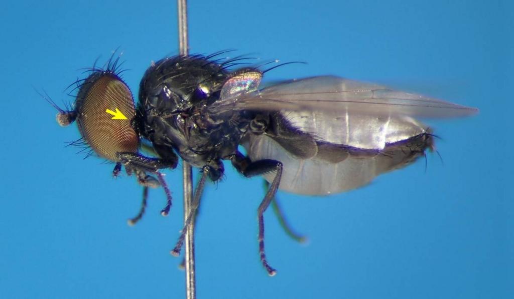 f:id:insectmoth:20170104232111j:plain