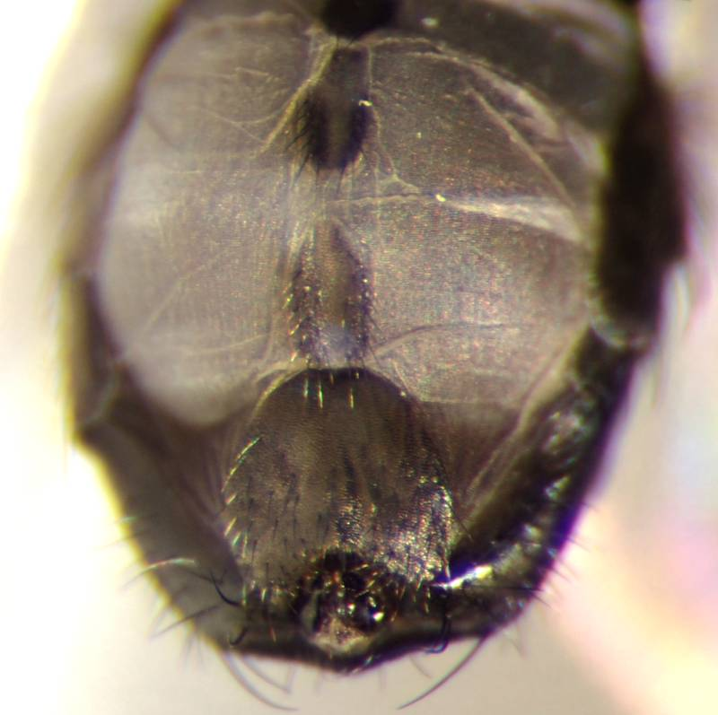 f:id:insectmoth:20170104232146j:plain
