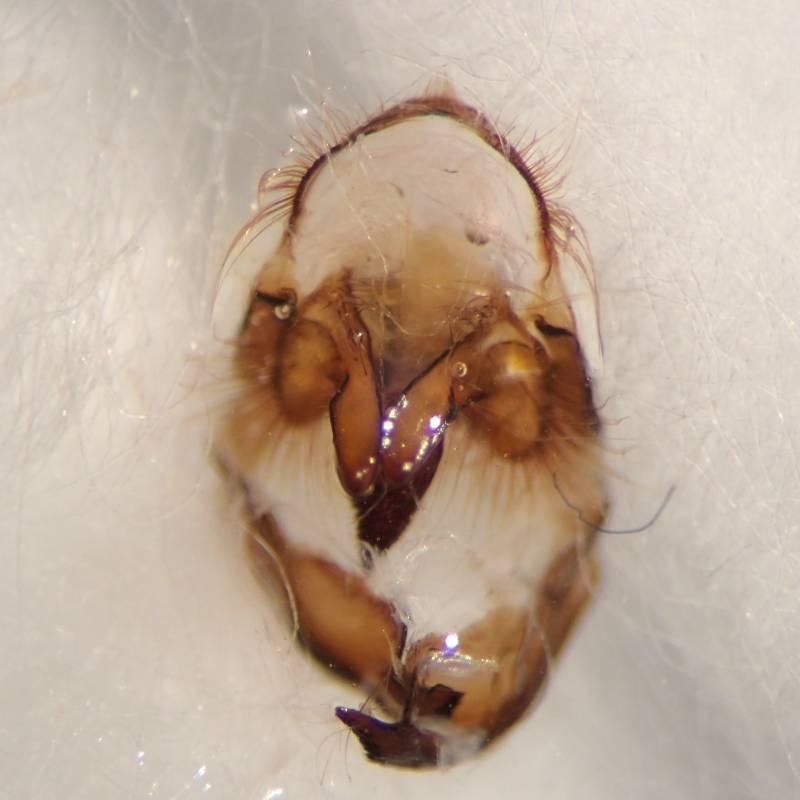 f:id:insectmoth:20170104232720j:plain