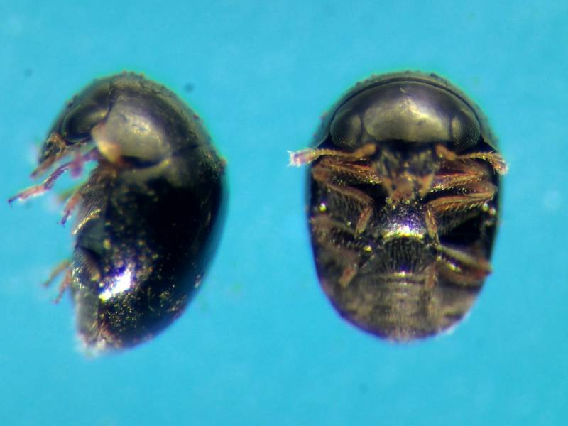 f:id:insectmoth:20170105120255j:plain