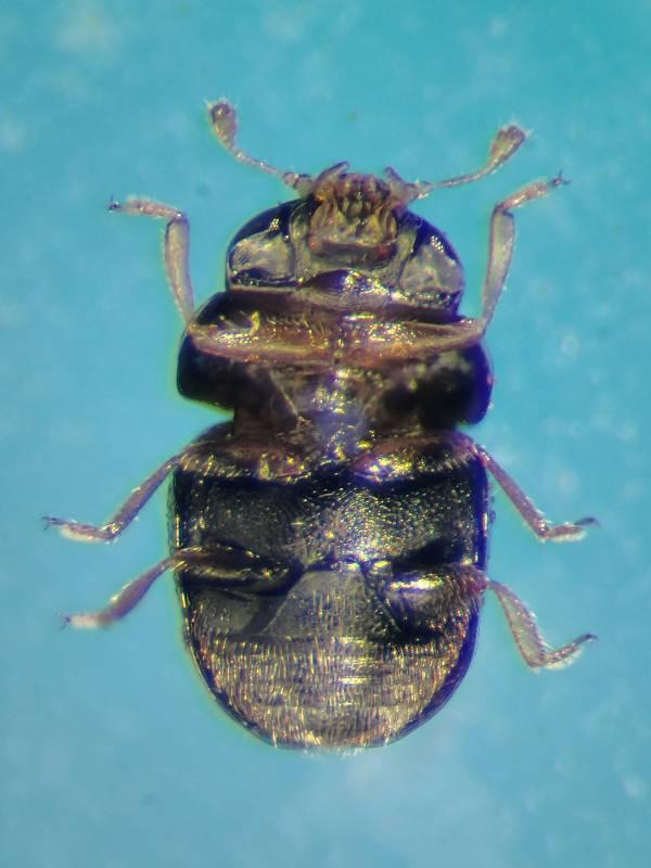 f:id:insectmoth:20170105120344j:plain