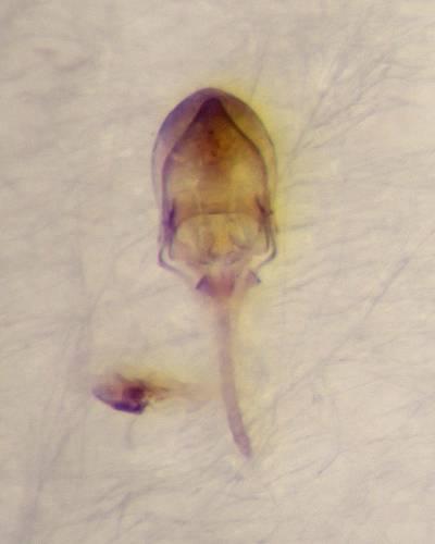 f:id:insectmoth:20170105120402j:plain