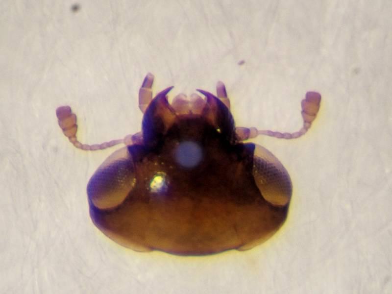 f:id:insectmoth:20170105120418j:plain