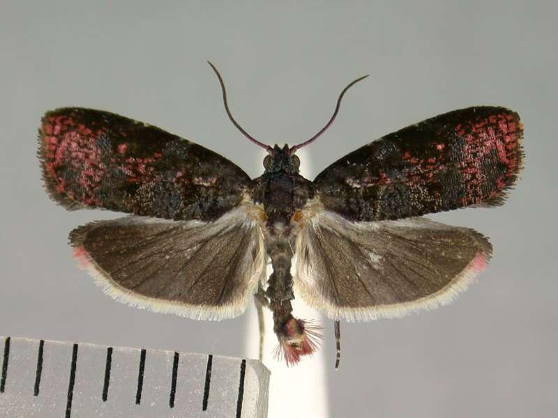 f:id:insectmoth:20170105121611j:plain