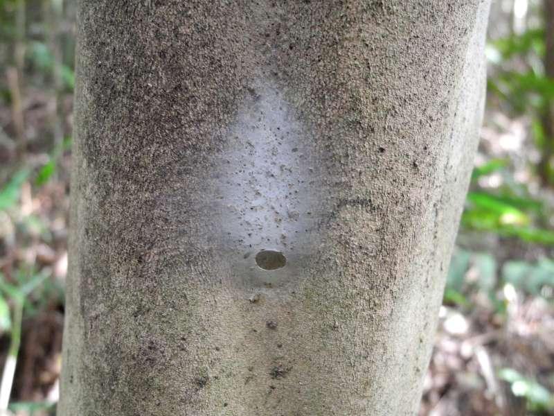 f:id:insectmoth:20170105122505j:plain