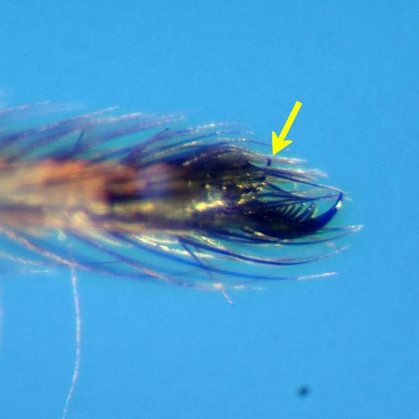 f:id:insectmoth:20170105122745j:plain