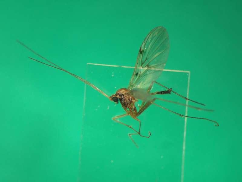 f:id:insectmoth:20170105155731j:plain