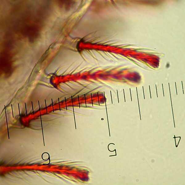 f:id:insectmoth:20170105165409j:plain