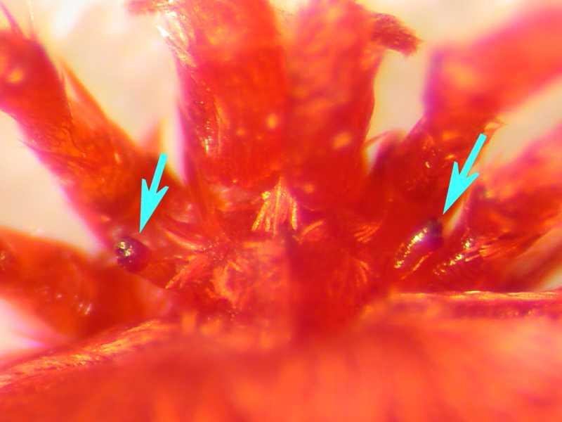 f:id:insectmoth:20170105165738j:plain