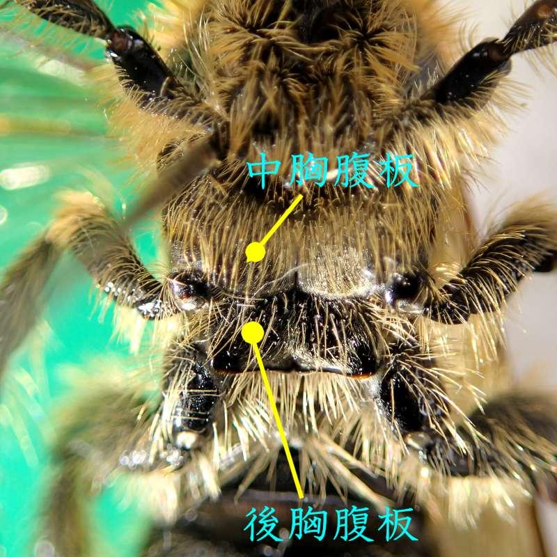 f:id:insectmoth:20170105165938j:plain