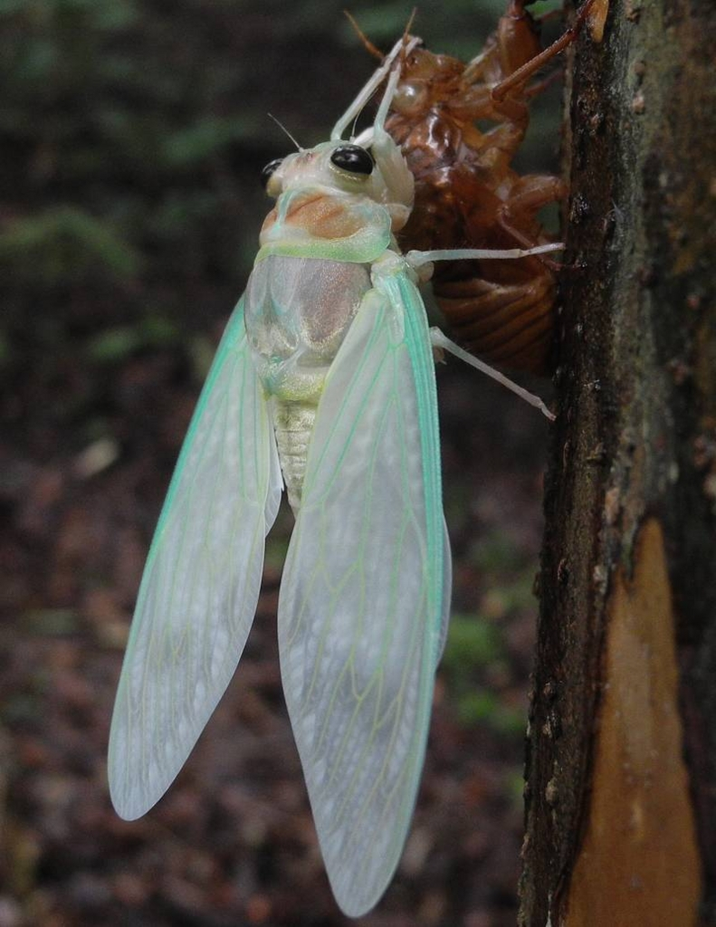 f:id:insectmoth:20170105170127j:plain